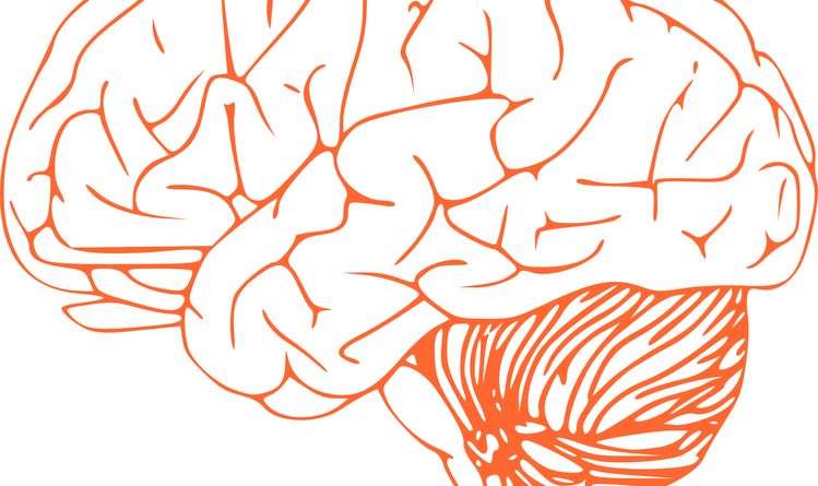 brain-305774_960_720