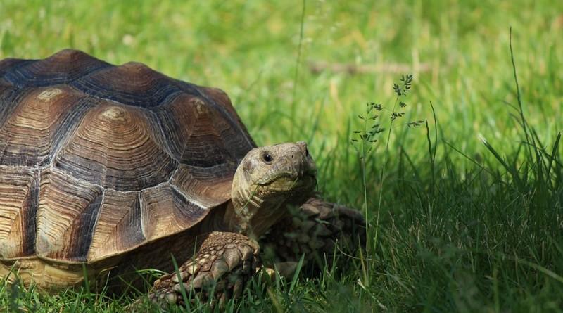 tortoise-1232117_960_720
